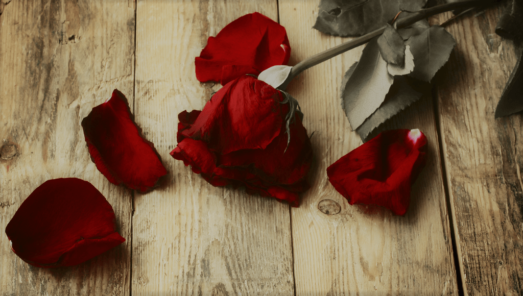 Amores Ardentes, Amores Frustrantes. Pedro Martins Psicoterapeuta Psicólogo Clínico