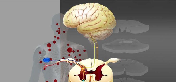 Pensa que a Dor Crónica é puramente física? Pedro Martins - Psicólogo Clínico/Psicoterapeuta